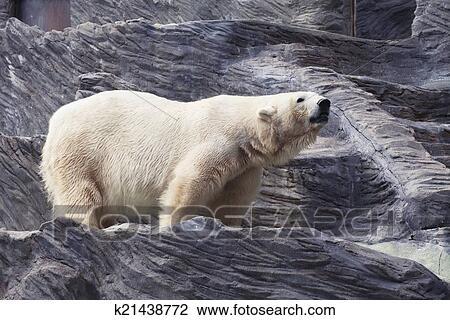 图象-北极熊k21438772-搜索蝴蝶,印刷图吧,照片和土尔其图片翅图片