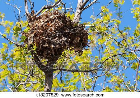 stock fotograf baum eichh rnchen nest hoch in a baum k18207829 suche stock fotografie. Black Bedroom Furniture Sets. Home Design Ideas