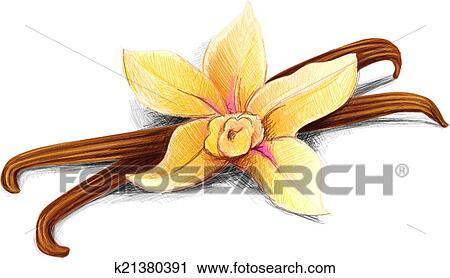 Clipart gousse vanille k21380391 recherchez des clip arts des illustrations des dessins et - Vanille dessin ...