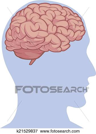 Clip Art of Human Body Part - Brain Inside Head k21529837 - Search ...