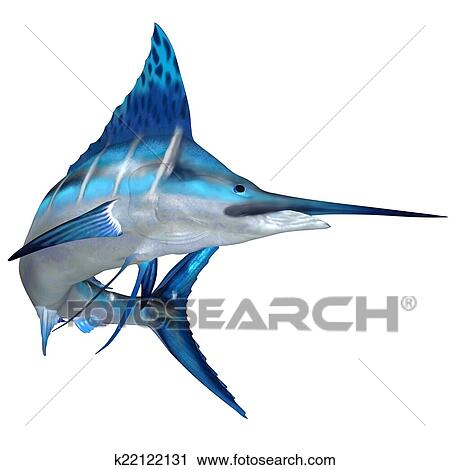 Blue Marlin Drawing