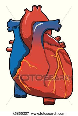 clip art of human heart system with isolated white background rh fotosearch com human heart clipart images human heart clipart
