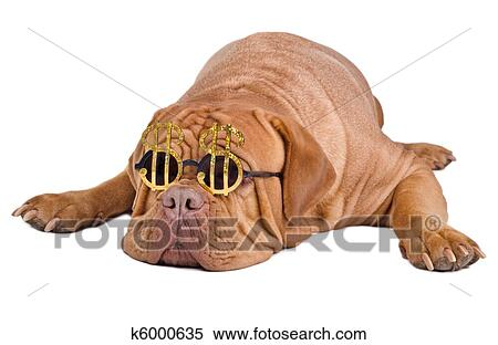dogue hindu personals Find your perfect stud dog today, free to advertise, free to join, browse over 16800 stud dogs now.