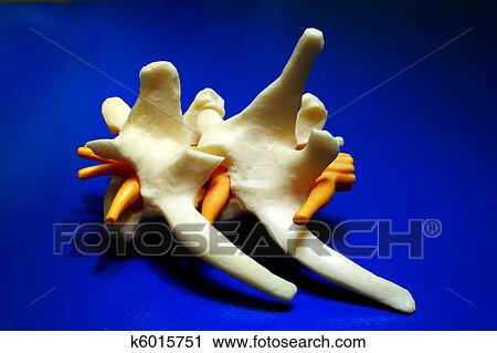 Sulla parte lasciata di un dorso sotto una pala il dolore dolorante in