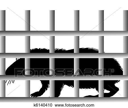 テンジクネズミの画像 p1_15