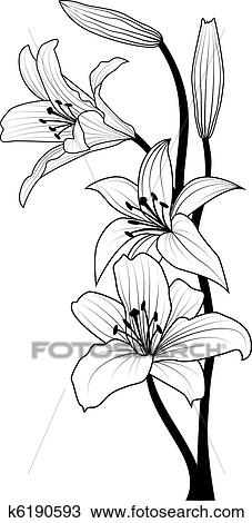 Clipart of lily k6190593 - Search Clip Art, Illustration ...