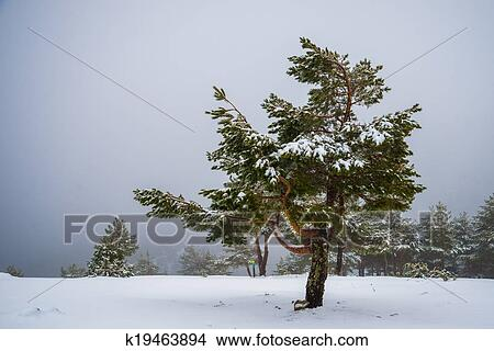 Drawings of snowy forest in madrid mountains k19463894 - Madrid forest ...
