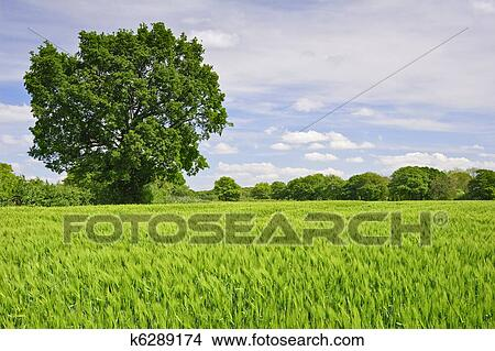 stock photo of beautiful image of agricultural field Wind Clip Art Sunny Clip Art