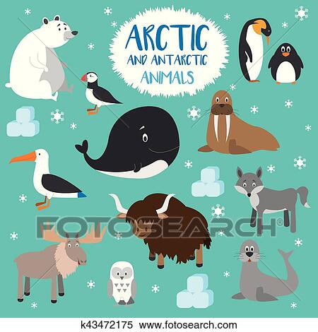 clipart of vector set arctic and antarctic animals flat style rh fotosearch com