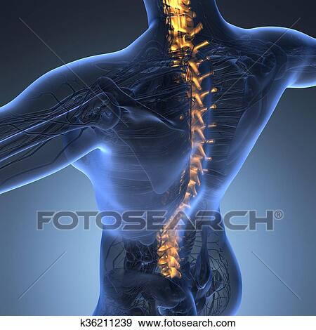 Stock Illustration Of Human Backache And Back Pain With An Upper