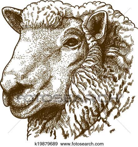 Clipart ngraving t te mouton k19879689 recherchez - Dessin tete de mouton ...