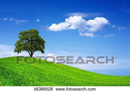 banque d 39 images beau arbre ch ne sur champ vert k6386526 recherchez des photos des. Black Bedroom Furniture Sets. Home Design Ideas