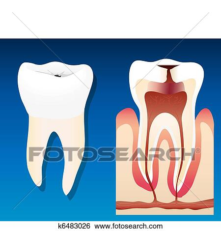 Clip Art of Unhealthy tooth k6483026 - Search Clipart ...