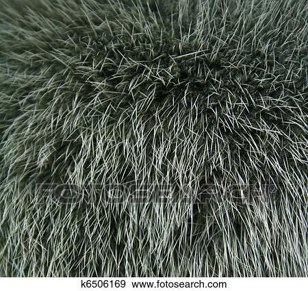 Banque de photographies les fourrure de a vison peint vert couleur bo te usage comme - Foto poile ...