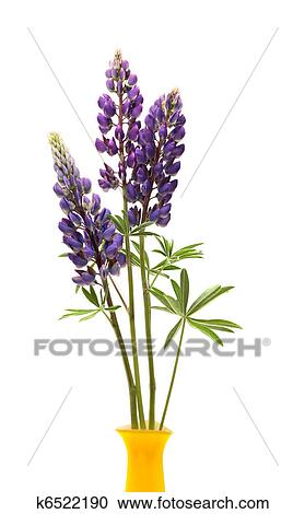 stock photography of lupin flowers in vase k6522190