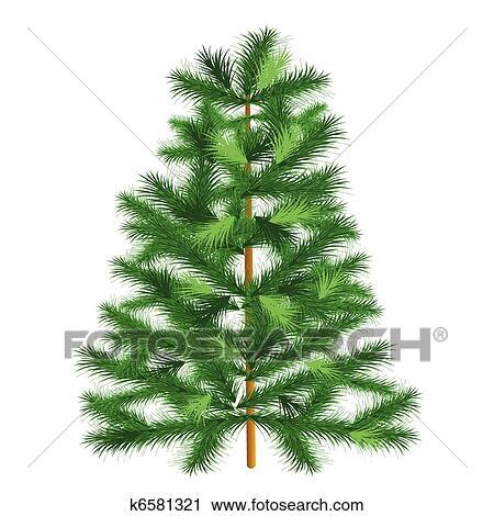 Clipart arbre feuilles persistantes arbre sapin for Arbres a feuilles persistantes