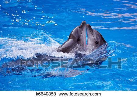 Immagini delfino k6640858 cerca archivi fotografici for Cerca per foto