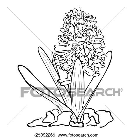 clipart of hand drawn flowers - garden hyacinth k25092265 - search