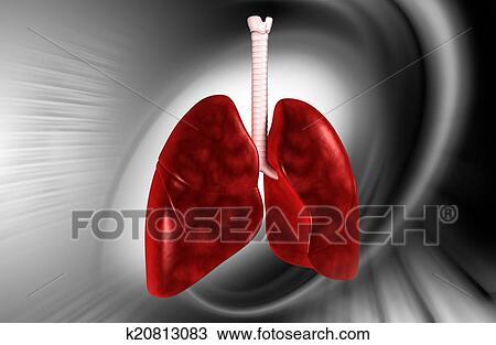 手绘图 - 肺