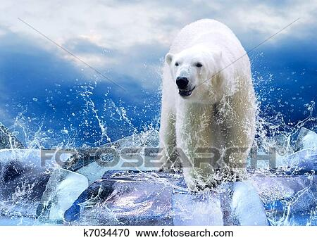 免老虎(rf)类版税-怀特,北极熊,图片,在上,the,冰,在中,水证券猎人怎么查ib图片