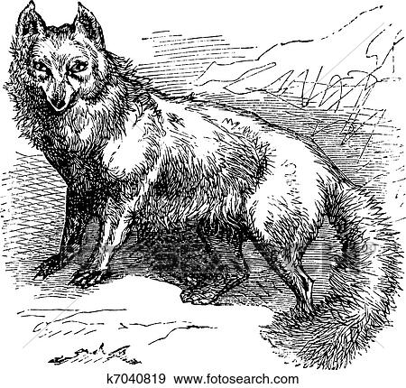 Clipart renard arctique ou vulpes lagopus vendange gravure k7040819 recherchez des - Clipart renard ...