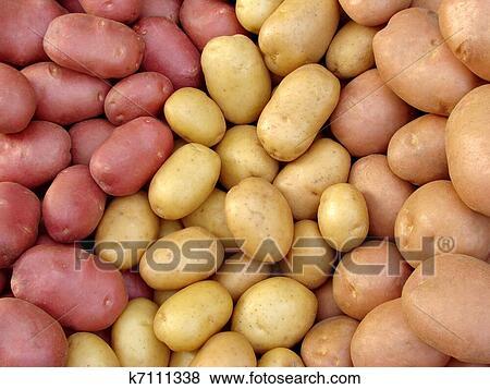 Immagini raccogliere patata tuberi k7111338 cerca for Cerca per foto