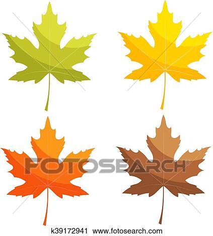 剪贴画 - 放置, 在中, 颜色, 矢量, 枫树叶片, 在上, a, 怀特, 背景.图片