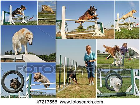 Immagini agilit k7217558 cerca archivi fotografici for Cerca per foto