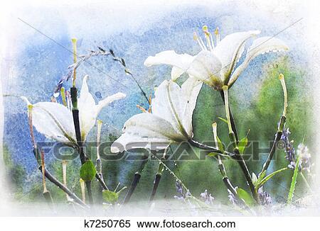 图片银行 - 白的百合花