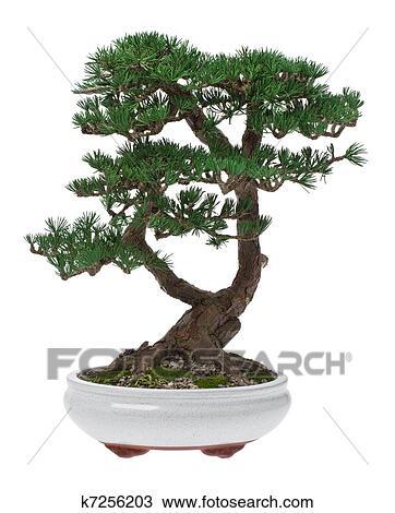 stock foto bonsai baum k7256203 suche stock fotografien posterbilder bilder und clip art. Black Bedroom Furniture Sets. Home Design Ideas