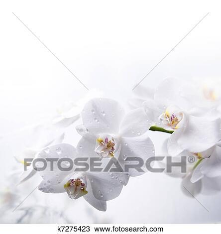 Archivio fotografico bianco orchidea su il acqua for Orchidea acqua