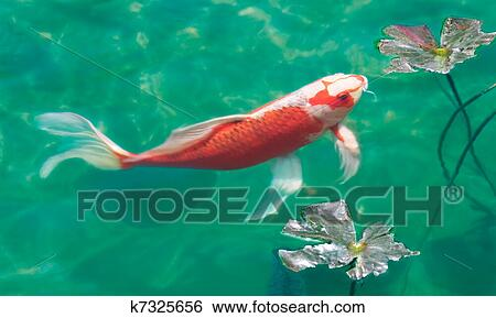 Stock images of koi pond k7325656 search stock for Koi ponds near me
