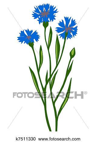 Tekening van de bloem korenbloem o bekijk grotere illustratie