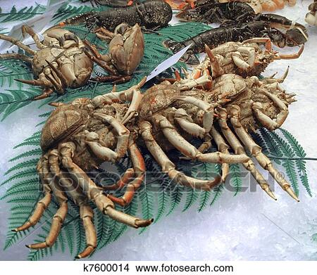 Crustacea - Crabs, shrimps, barnacles, woodlice - Animalia