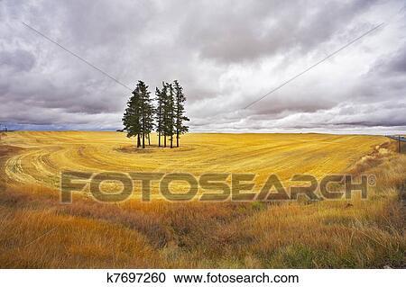黄色thunderftp_免版税(rf)类图片 - 巨大, thundercloud, 在上面, a, 黄色的领域.