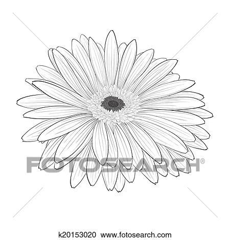Gerbera Daisy Line Drawing Clipart of beautiful m...