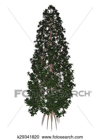 Galleria di illustrazioni meridionale o toro baia for Magnolia pianta prezzi