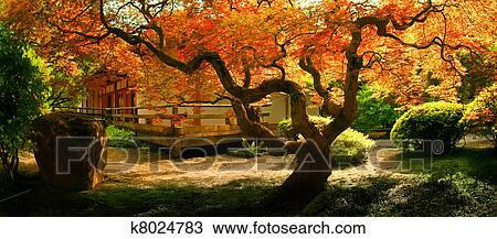 banque de photo arbre dans une asiatique jardin k8024783 recherchez des images des. Black Bedroom Furniture Sets. Home Design Ideas