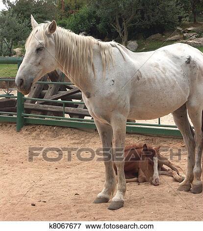 qq头像带马的图片