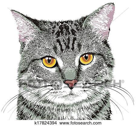 Clipart gatto k17824394 cerca clipart illustrazioni for Gatto clipart