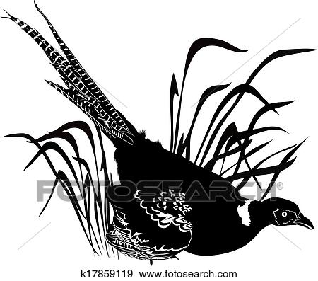 clip art of bird pheasant k17859119 search clipart illustration rh fotosearch com clipart pheasant silhouette pheasant clipart black and white