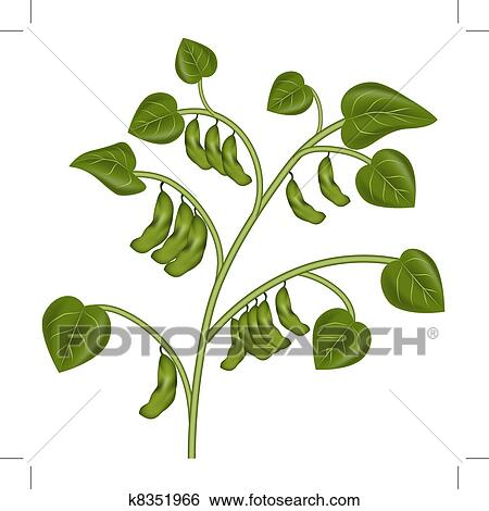 Clip Art of Soybean Plant k8351966 - Search Clipart ...