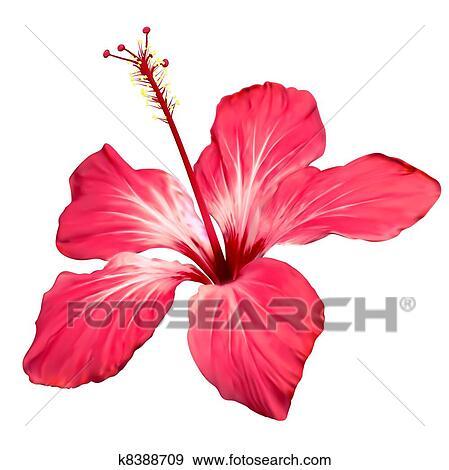 clip art hawaii blume bl te vektor kunst k8388709 suche clipart poster illustrationen. Black Bedroom Furniture Sets. Home Design Ideas