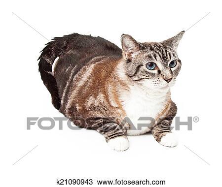 cat feather tattoo