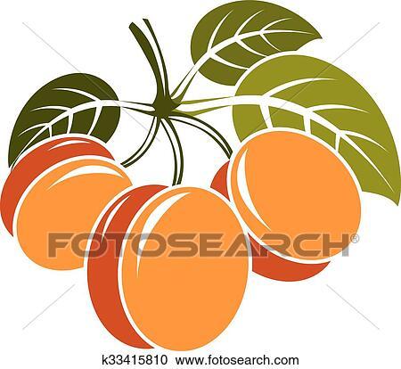 剪贴画 - 收获, 符号, 矢量, 水果, isolated.图片