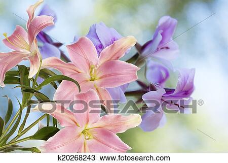 图吧- 百合花, 花园