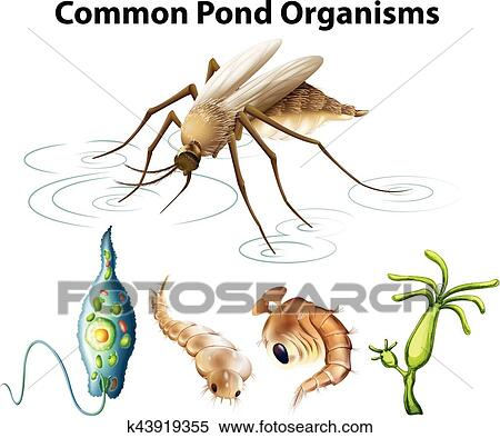 Clipart of common pond organisms diagram k43919355 search clip art clipart common pond organisms diagram fotosearch search clip art illustration murals ccuart Choice Image