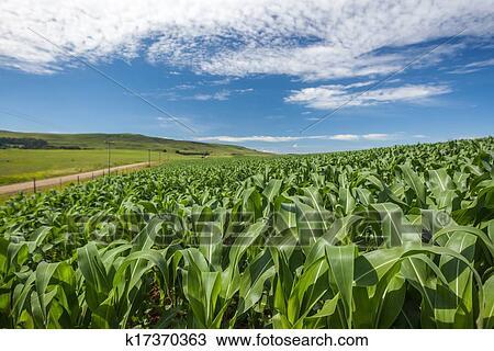 国营蓝洋农场风景