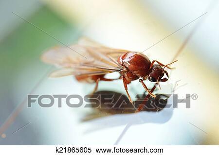 stock bild klein insekt termite wei e ameise. Black Bedroom Furniture Sets. Home Design Ideas