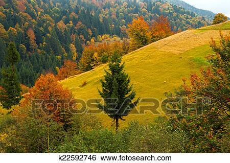 森林,                   离开,                   秋天图片
